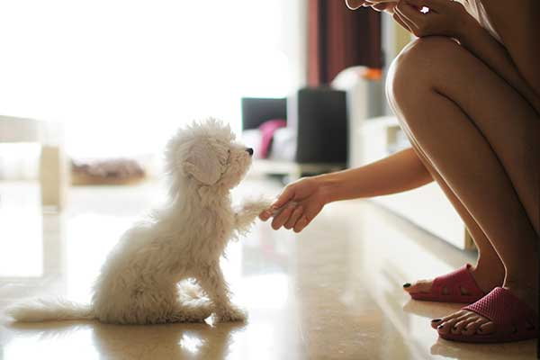 Woman holding a puppy's paw